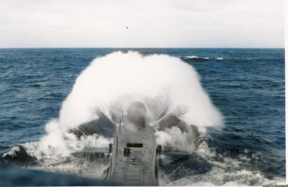 Walrus in heavy seas